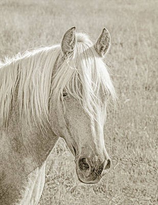 Photograph - Horse Portrait In Sepia Brown by Jennie Marie Schell