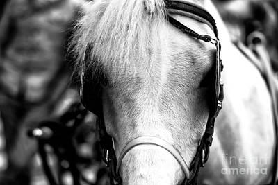 Horse Portrait In Sorrento Art Print