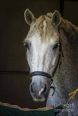 Photograph - Horse Portrait by Joann Long