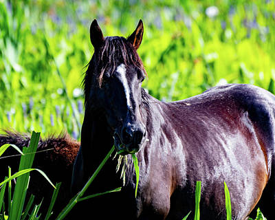 Photograph - Horse Portrait  by Joseph Caban