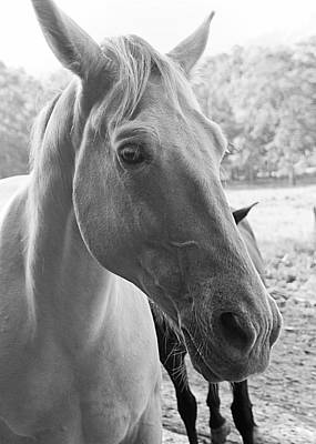 Photograph - Horse Portrait by Nathan Little