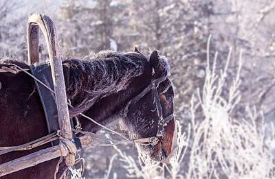 Wild Animal Photograph - Horse Portrait by Oksana Ariskina