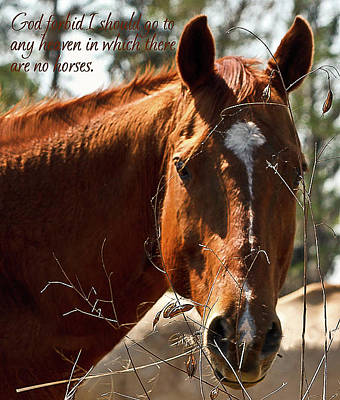 Photograph - Horse Portrait by Robin Blaylock