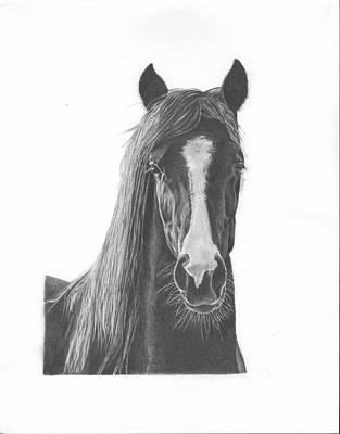 Horse Portrait Art Print by Sue Olson