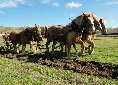 Plow Horse Photograph - Horse Power by Jeff Swan