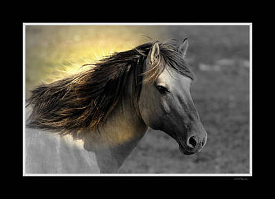 Photograph - Horse Profile by Ericamaxine Price