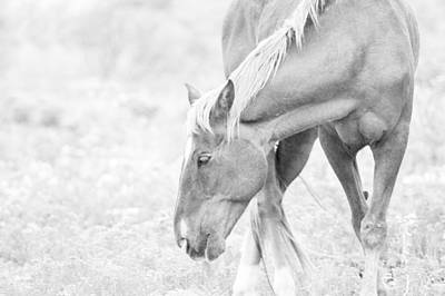 Horse Ears Photograph - Horse Profile In Black And White by Stephanie McDowell
