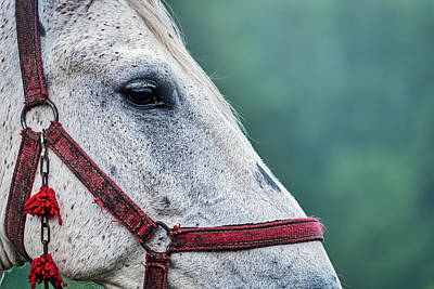 Photograph - Horse Profile - Romania by Stuart Litoff