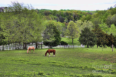 Photograph - Horse Ranch Green Pastures Landscape  by Chuck Kuhn