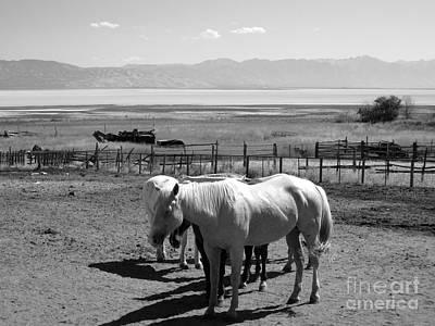 Horse Ranch Art Print