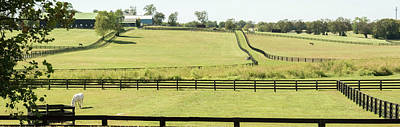 Photograph - Horse Ranch Pano by Pamela Williams