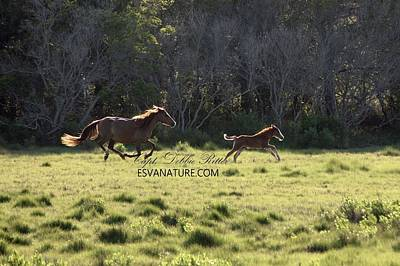 Photograph - Horse Running 7030 by Captain Debbie Ritter