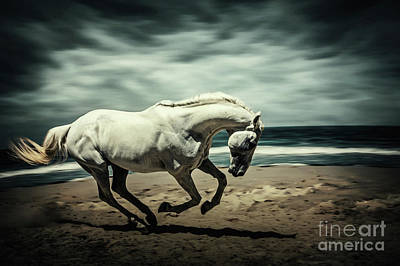 Photograph - Horse Running On Beach by Dimitar Hristov