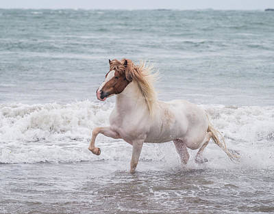 Horse Running On Coastline, Iceland Art Print by Panoramic Images
