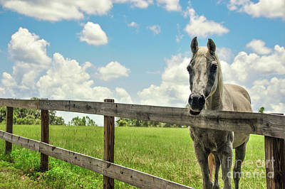 Paradise On Earth Photograph - Horse Sanctuary Farm by Liesl Marelli