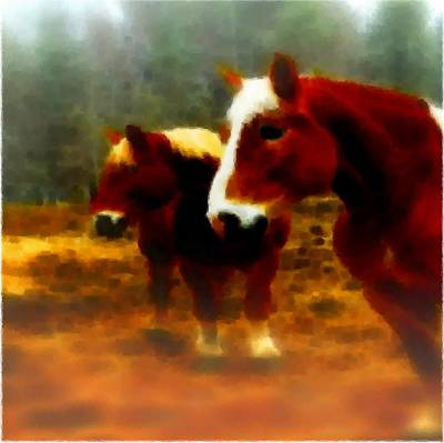 Photograph - Horse Scents-maine by Mike Breau