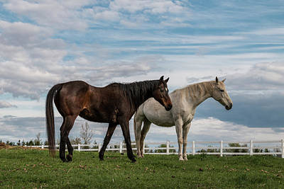 Photograph - Horses #2 by Patti Deters