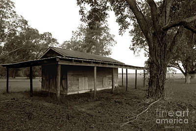 Photograph - Horse Shelter by Joseph G Holland