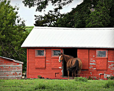 Photograph - Horse Shelter by Kathy M Krause