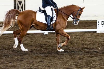 Photograph - Horse Show Dressage by Ben Graham