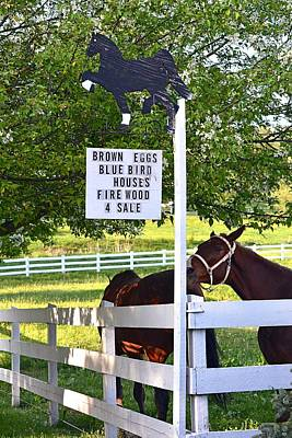 Photograph - Horse Sign With Horses by Tana Reiff