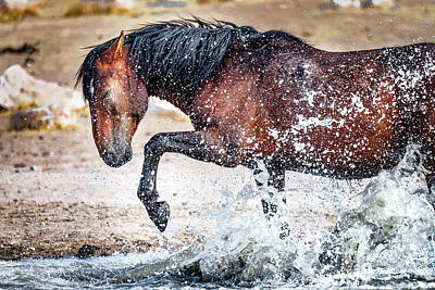 Photograph - Horse Splash by Michael Ash