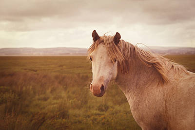 Photograph - Wild Horse by Steve Ball