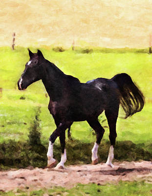 Digital Art - Horse Study #27 by Chamira Young