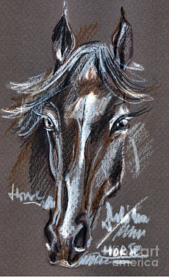 Drawing - Horse Study by Daliana Pacuraru
