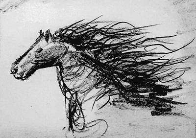 Drawing - Horse Study Pc by Hae Kim