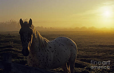 Photograph - Horse Sunrise Field by Jim Corwin