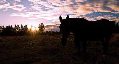 Photograph - Horse Sunset by Michael Thibault