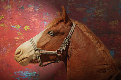 Digital Art - Horse Texture Portrait by Yury Malkov