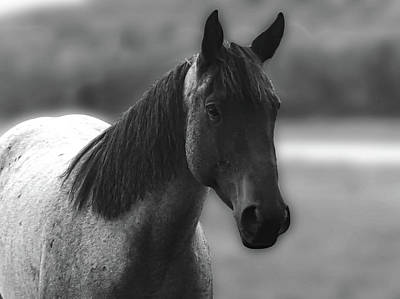 Photograph - Horse by Tiffany Erdman