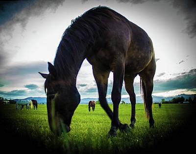 Photograph - Horse Time by Tyson Kinnison