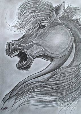 Animals Drawings - Horse by Timon Timotius