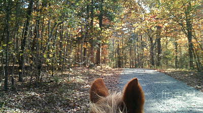Photograph - Horse Trail by Mary Tron