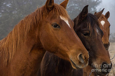 Photograph - Horse Triplets by Jennifer White