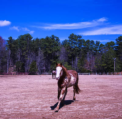 Animals Digital Art - Horse trotting in by Christopher Flees