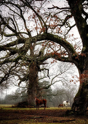 Horse Photograph - Horse Under Tree by Greg Mimbs