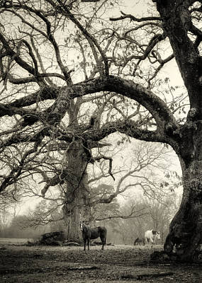 Horse Photograph - Horse Under Tree In Black And White by Greg Mimbs