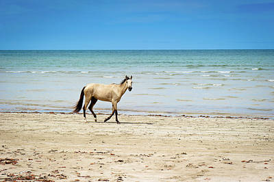People On Beach Wall Art - Photograph - Horse Walking On Beach by Vitor Groba
