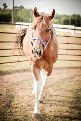 Photograph - Horse Walking Toward Camera by Kelly Hazel