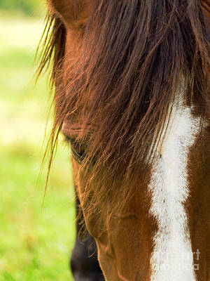 Forelock Photograph - Horse With Blaze by Rachel Morrison