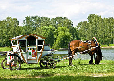 Photograph - Horse With Carriage by Irina Afonskaya
