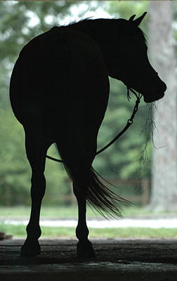 Photograph - Horse With Hay by Pam Kaster