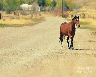 Photograph - Horse With No Name by Tru Waters