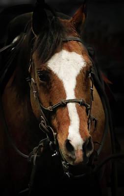 Photograph - Horse Wrangler by Athena Mckinzie