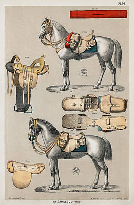 Drawing - Horseback Riding Equipments by Unknown