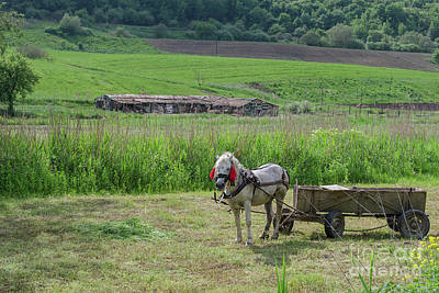 Photograph - Horsedrawn Haycart, Transylvania by Perry Rodriguez